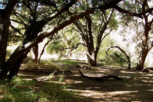 wildwood park los angeles westlake